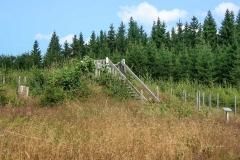 Waldskulpturenweg - Der Falke 1