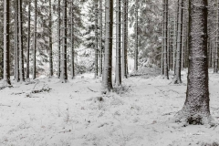 Waldskulpturenweg in Kühhude
