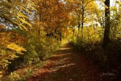 Herbstlicher Waldskulpturenweg in Grafschaft