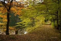 Mühlenteich im Herbst 2