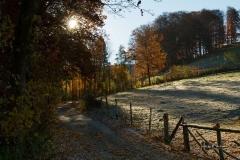 Waldskulpturenweg in Richtung Mühlenteich