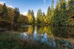 Mühlenteich im Herbst 3