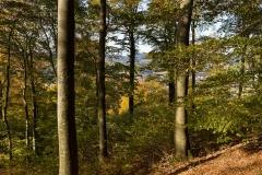 Wilzenberg-Herbst-04