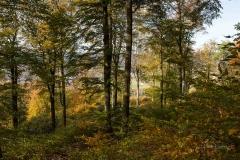 Wilzenberg-Herbst-05