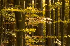 Wilzenberg-im-Herbst-01