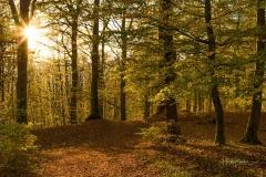 Wilzenberg-im-Herbst-05