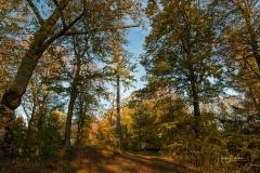 Wilzenberg-im-Herbst-10
