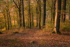 Wilzenberg-im-Herbst-12