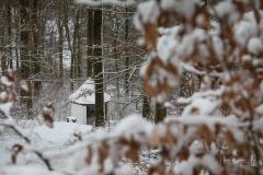 Winter_Wilzenberg-005