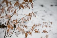 Winter_Wilzenberg-024