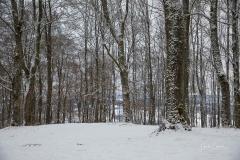 Winter_Wilzenberg-032