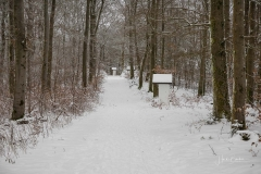 Winter_Wilzenberg-061