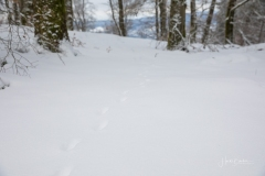 Winter_Wilzenberg-066
