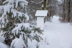 Winter_Wilzenberg-099