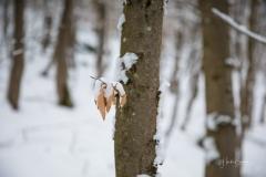Winter_Wilzenberg-108