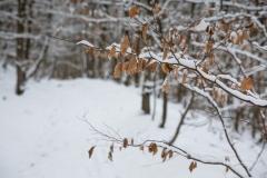 Winter_Wilzenberg-110