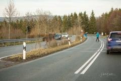 Wisente-im-Strassenverkehr-03