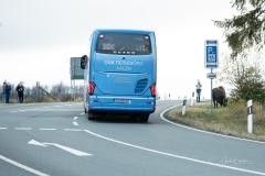 Wisente-im-Strassenverkehr-13