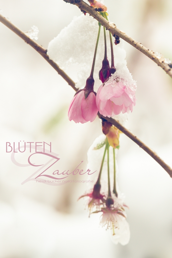 Blüten-Zauber