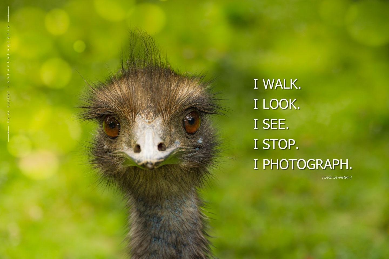 I photograph