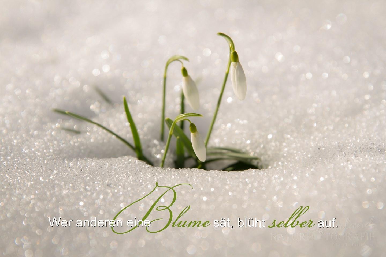 Wer anderen eine Blume säht...