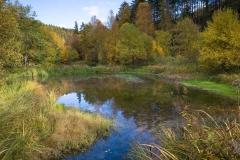 Biotop Silbersee in Züschen