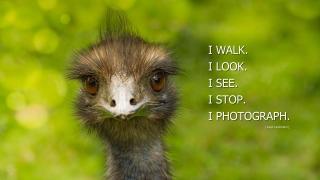 Zitat eines Fotografen