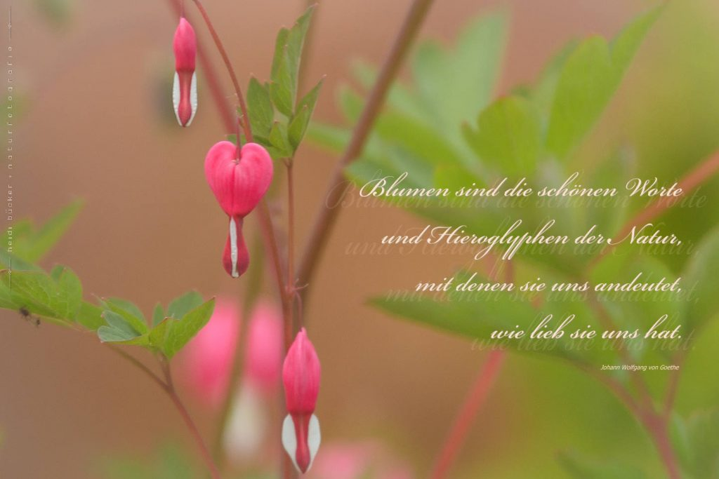 Blumen sind die schoenen Worte der Natur