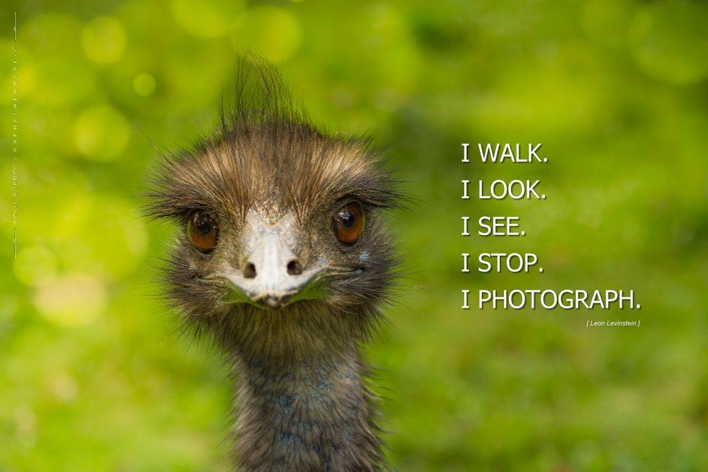 I walk. look, photograph
