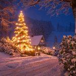 Weihnachtsbaum in Vorwald